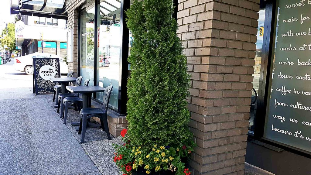 Roots Cafe - Vancouver Local Coffee Shop -